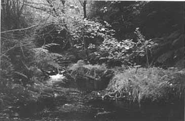 El río desaparecido